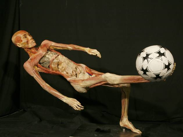 Human Bodies, The Exhibition