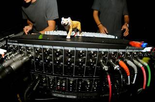 Tiger & Woods live! + DJ Fra + Shelby Grey
