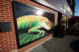 Lizard Lounge