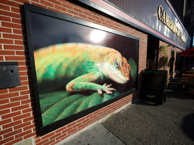 Lizard Lounge, Music and nightlife, Boston