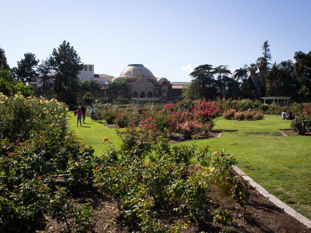 Exposition Park Rose Garden.