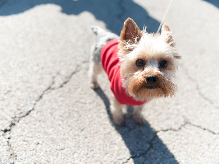 The best dog-friendly patios in Chicago