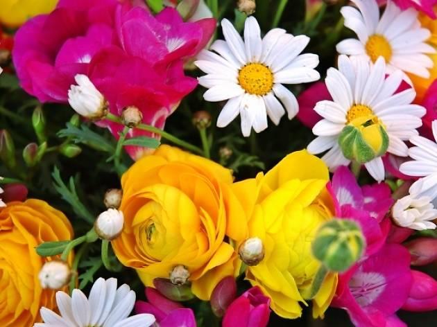 Cuina amb flors
