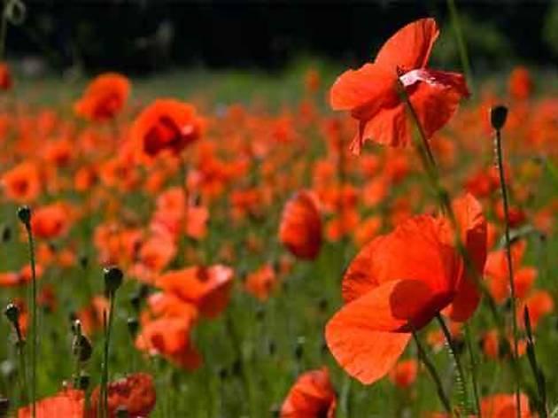 La primavera a Collserola: Les quatre estacions