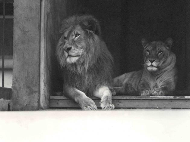 (©ZSL London Zoo)