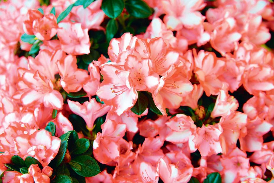 Putrajaya Floria flower market