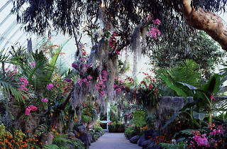The best places to relax: New York Botanical Garden