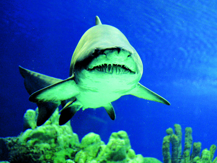 Dive into a tank full of sharks in Aquaria KLCC