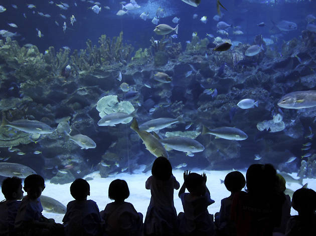 Aquaria KLCC for kids