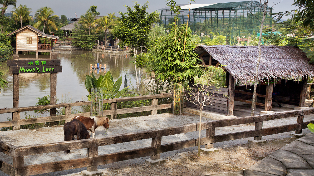 Walk with the animals at Farm in the City