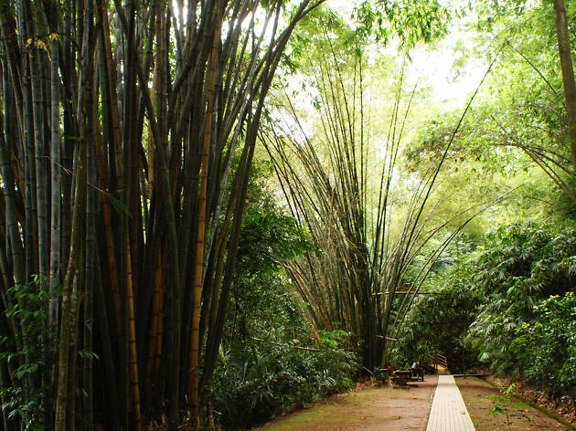 Go on a nature trail at KL Forest Eco Park