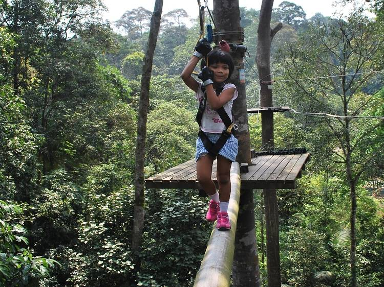 Play Tarzan at Skytrex