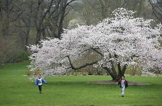 Arnold Arboretum, Sights and attractions, Boston