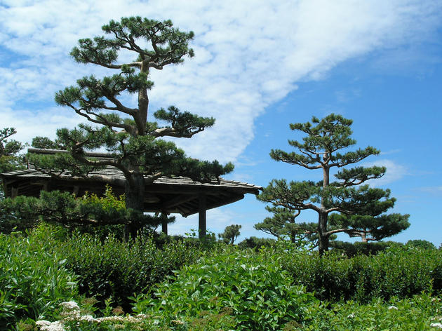 Commune with nature at the Chicago Botanic Garden