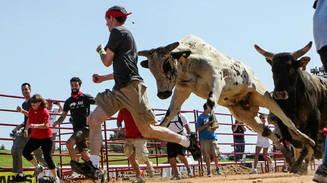 The Great Bull Run comes to  Hawthorne Race Course in Cicero, July 12, 2014.