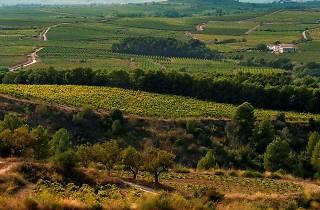 Vinyes prop de Sant Sadurní d'Anoia