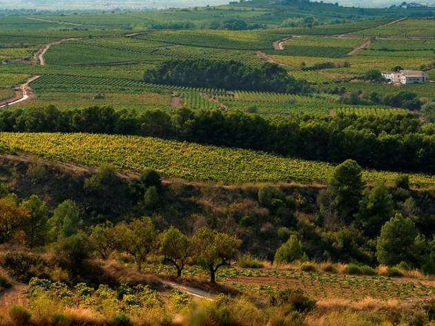 Alt Penedès: Castles and mill-houses in the land of cava