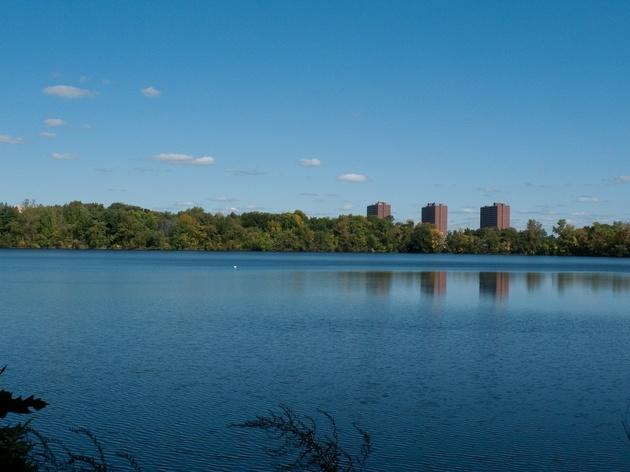 Explore Fresh Pond Reservation