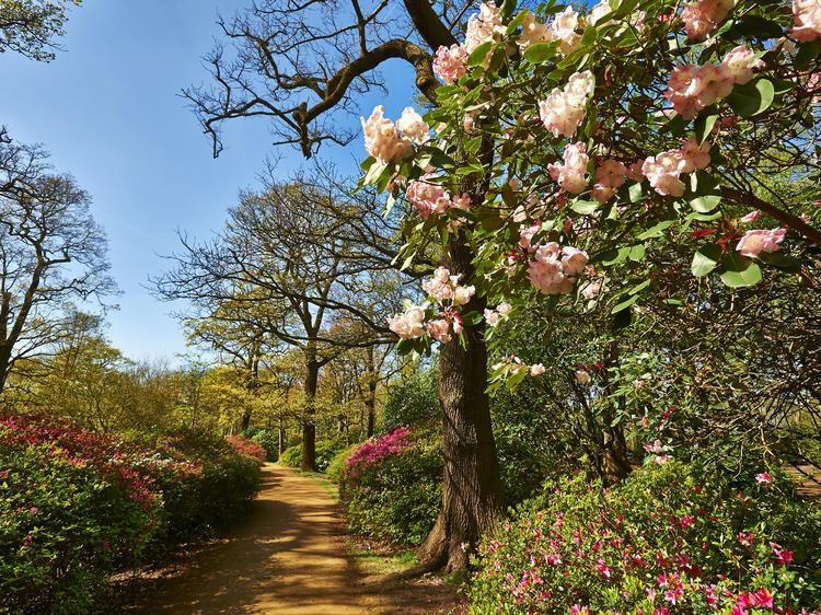 Hidden gardens in London