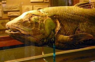 Harvard Museum of Natural History, Museums, Things to Do, Boston