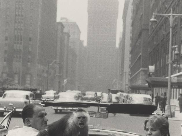 (Garry Winogrand, 'Park Avenue, New York', 1959 / © The Estate of Garry Winogrand / Courtesy Fraenkel Gallery, San Francisco)
