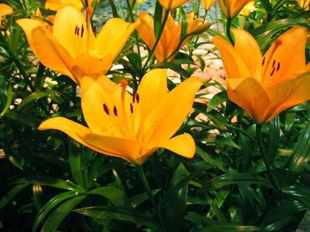 New England Spring Flower Show