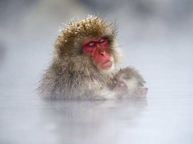 Jasper Doest (Japanese Macaques, Jigokudani Yaen Kōen, Yamanouchi, Shimotakai District, Nagano Prefecture, Japan)
