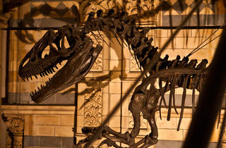 (Dinosaur skeleton at Dinosnores sleepover © Celia Topping)