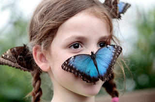 (Annual summer Sensational Butterflies event © Kevin Webb/NHM Image Resources)