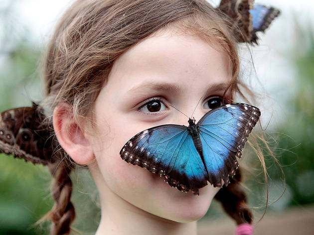 (Annual summer Sensational Butterflies event © Kevin Webb/NHM Image Resources)