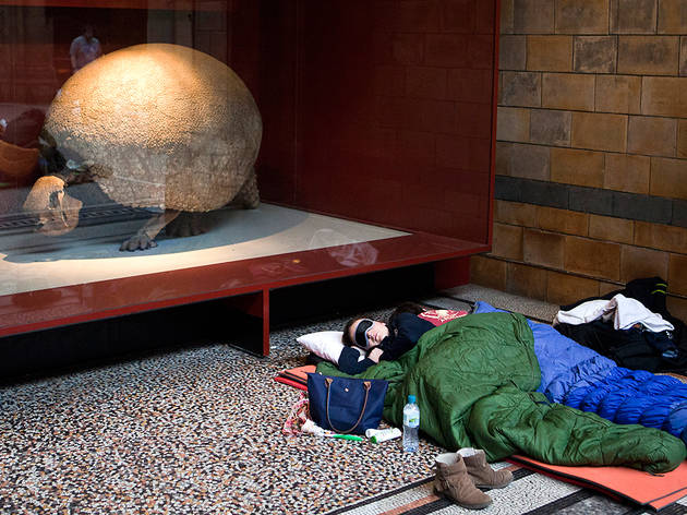 (Dinosnores adult sleepover at the NHM © Celia Topping)