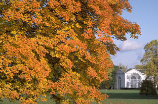 (Autumn at Kew )