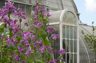 (Summer at Kew © A.McRobb)