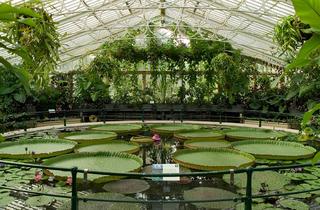 (Waterlilies House)