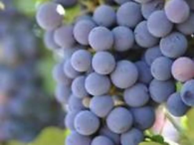 Grapevine (CLOSED)