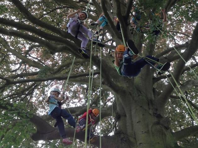 Tree Climbing at Alexandra Palace