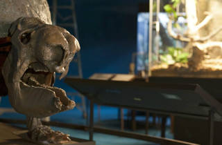 Darwin (Foto: Cortesía Secretaría de Cultura)
