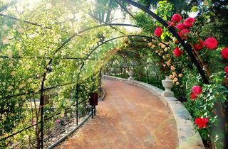 Rosaleda del Parque del Oeste (©José Javier Martin Espartosa)