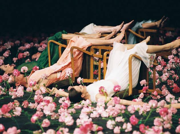 Nelken (© Ulli Weiss)