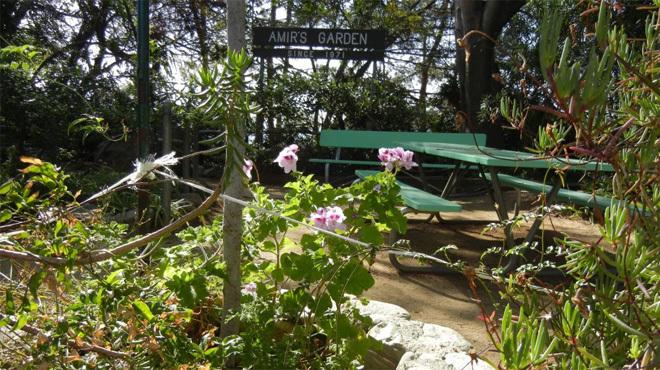 Amir's Garden.