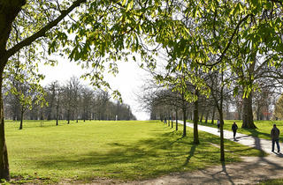 (© Greywolf, The Royal Parks)