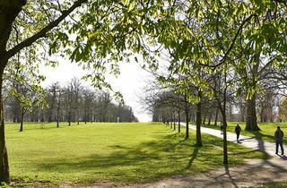 (© Greywolf, The Royal Parks)