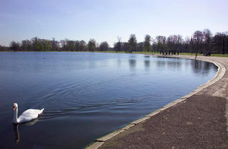 (The Round Pond © Greywolf, The Royal Parks)