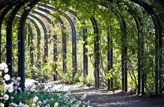 Descanso Gardens.