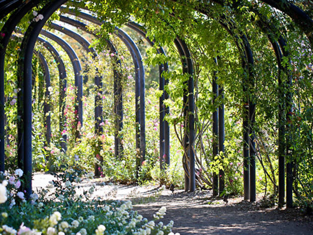 Take a stroll through the Descanso Gardens