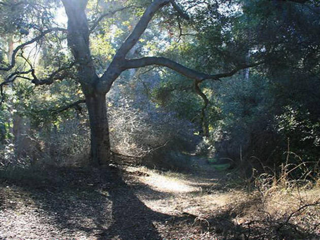Fryman Canyon Park
