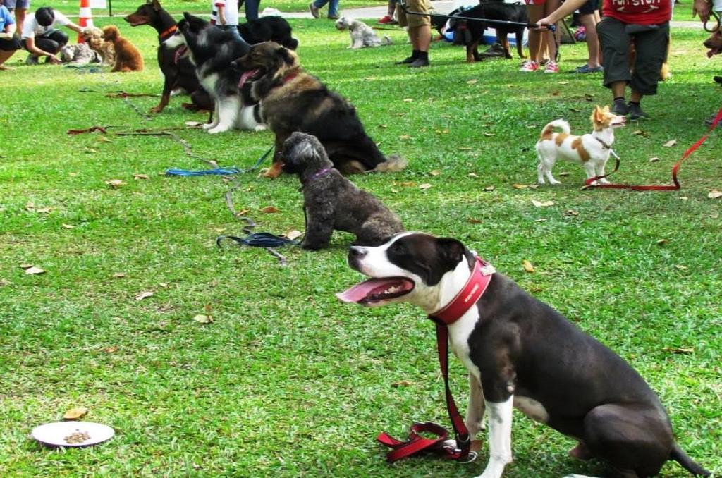 Malaysian National Animal Welfare Foundation