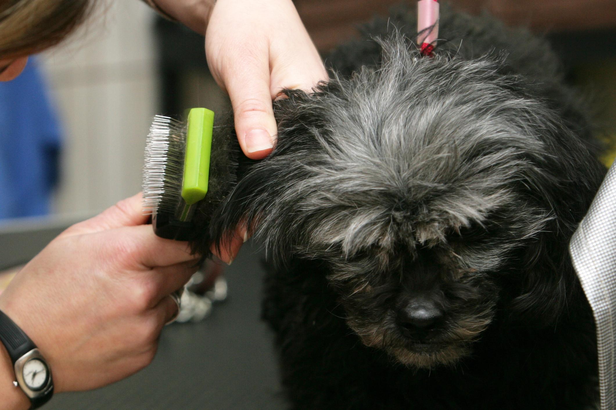 Pet grooming, spa