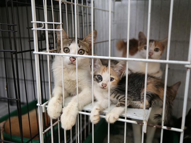 Katzen Cat Sanctuary