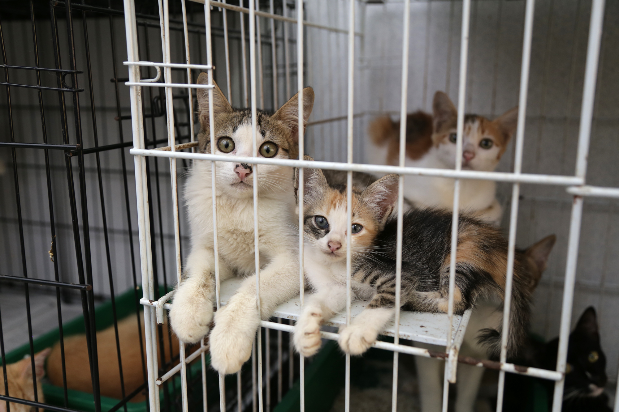 Animal adoption centres in KL